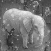 B08-elephant-009